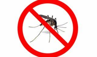 komarzyce nam nie starszne