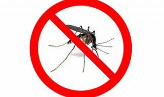 ostrowiec bez komarow