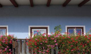 balkon-z-kwiatami